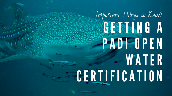 Getting Padi Certified in Thailand