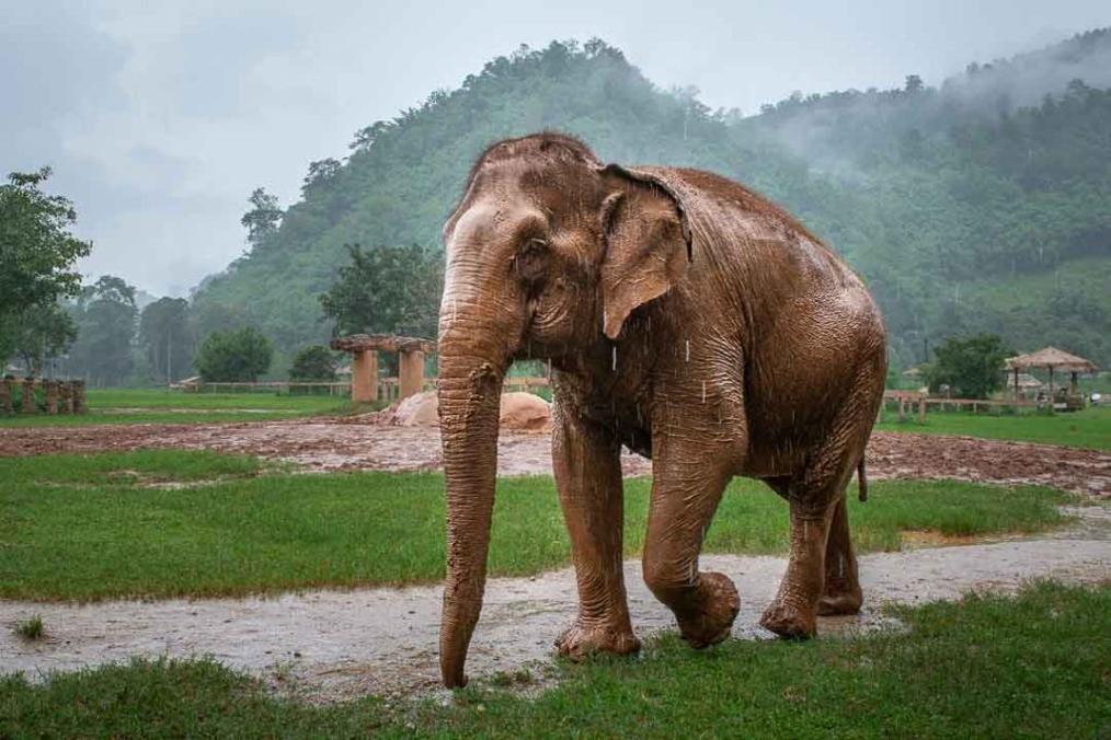 Passer une journée avec les éléphants dans un sanctuaire