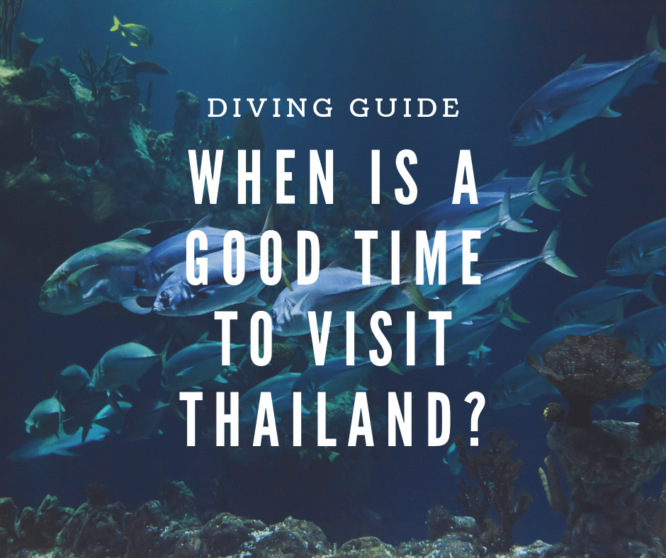 When is the best time to go on a diving trip to Thailand?