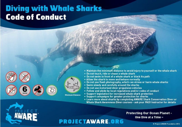 Rules to follow when diving with whale sharks