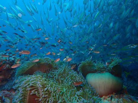 Reef diving spots