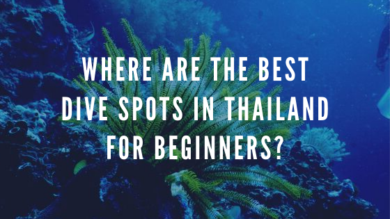 where are the best dive spots in Thailand for beginners?